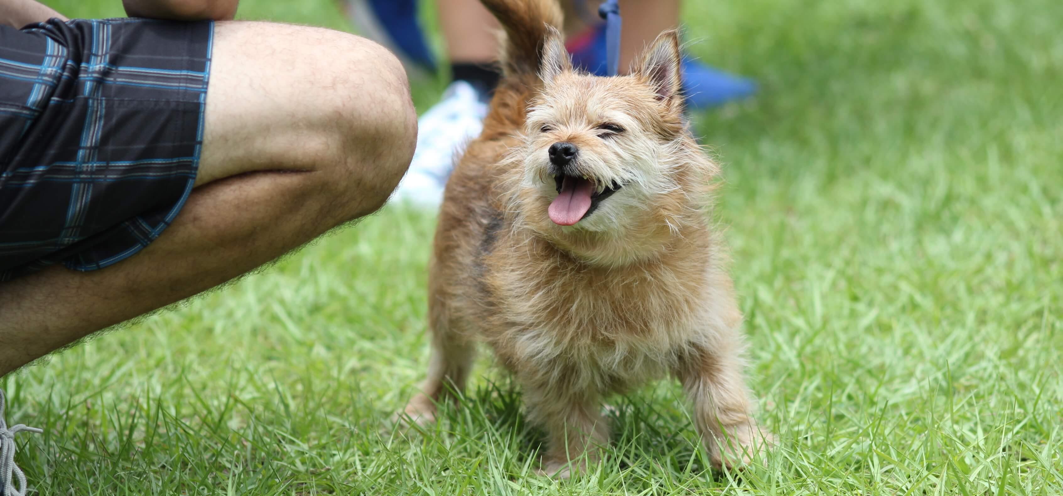 FGCU Puppy Palooza Spring 2015