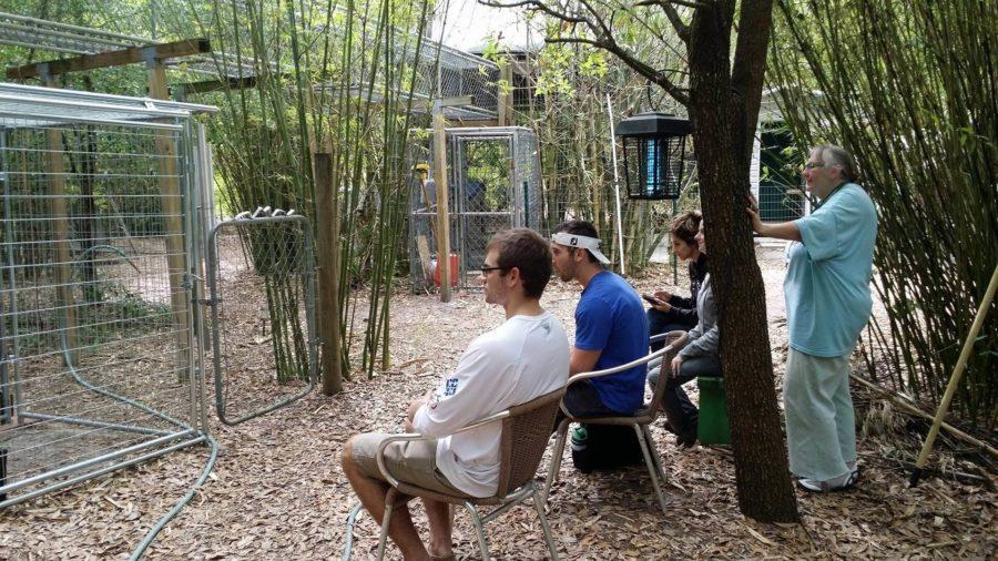 FGCU+alumnus+conducts+research+at+primate+sanctuary