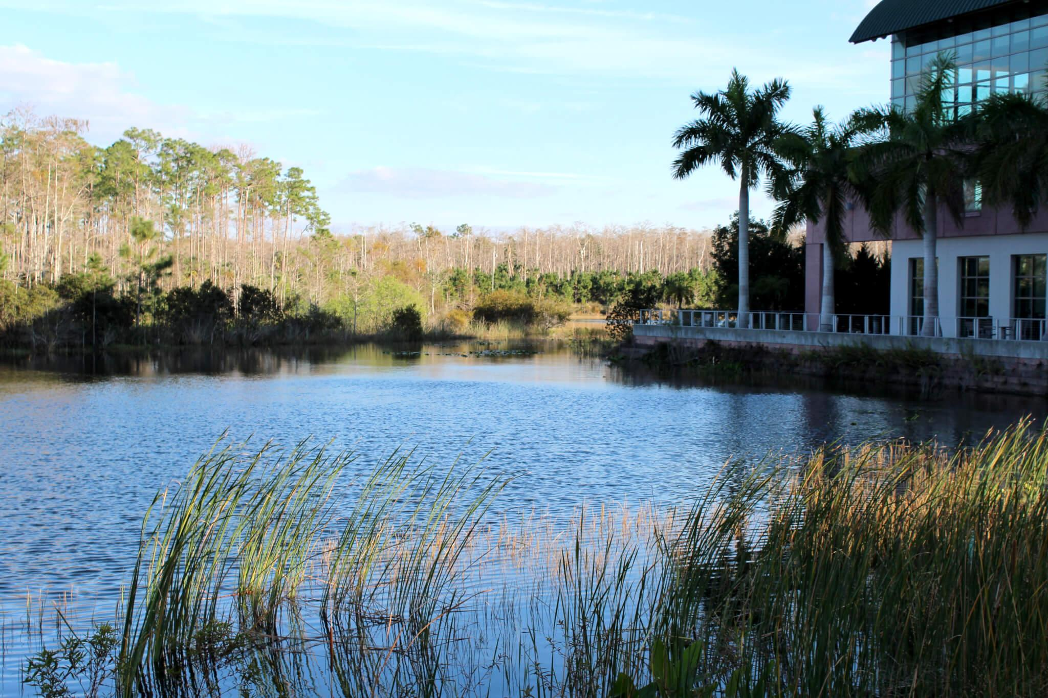 FGCU makes efforts in conserving biodiversity in Florida