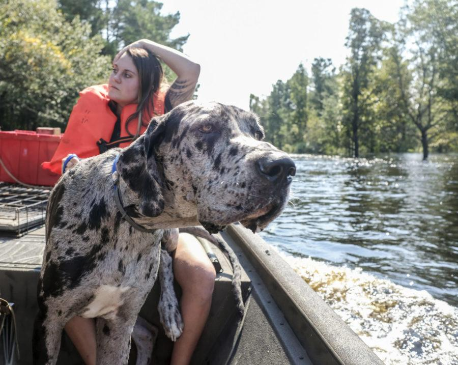 AP File Photo // While Cape Coral may soon be banning buying and selling dogs, it is still a problem. But its a step.