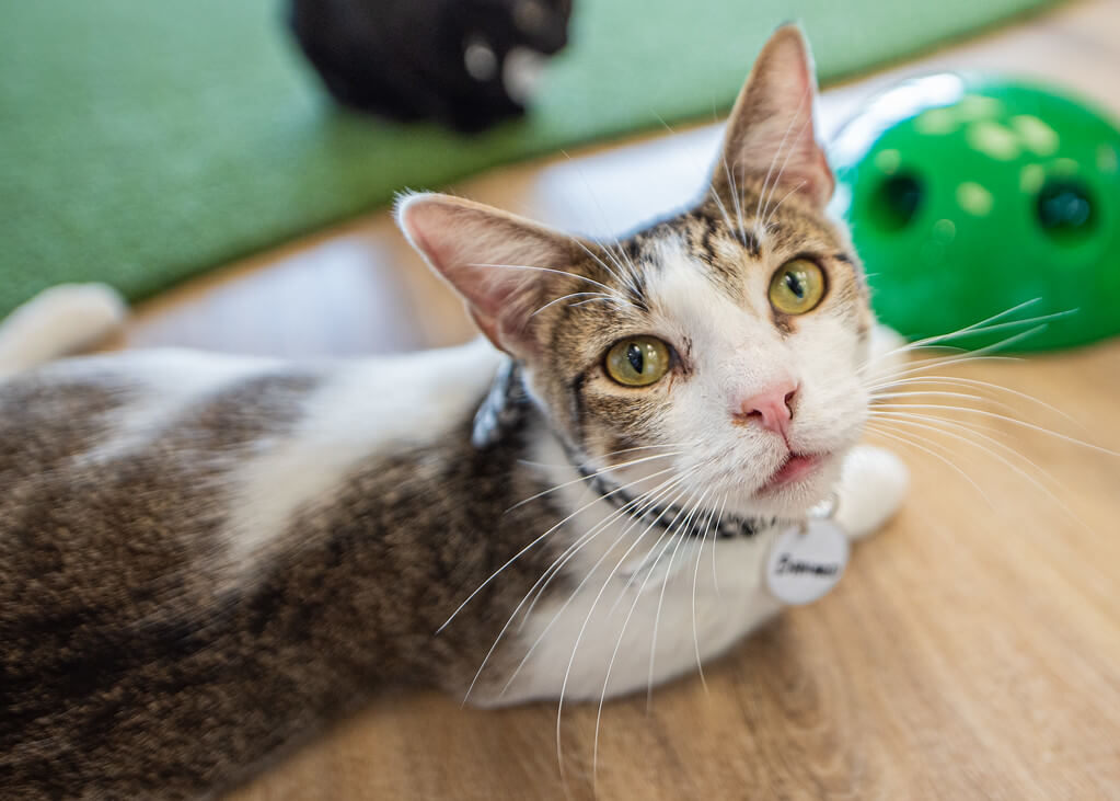 SWFL Hot Hangouts: Cattyshack Cat Cafe